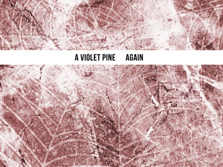 A Violet Pine – Again