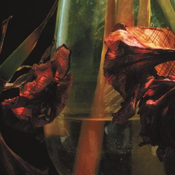 Hayvanlar Alemi – Psychedelia In Times Of Turbulence
