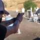 Poison, Bret Michaels si allena a sparare per una serie tv [video]